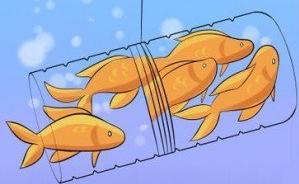 peixinhos presos
