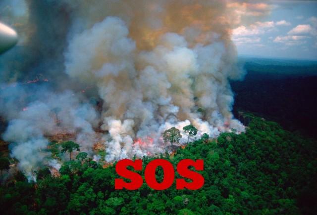 AMAZÔNIA SOS